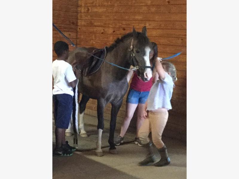 Marlboro Ridge Equestrian Center Upper Marlboro Md Patch