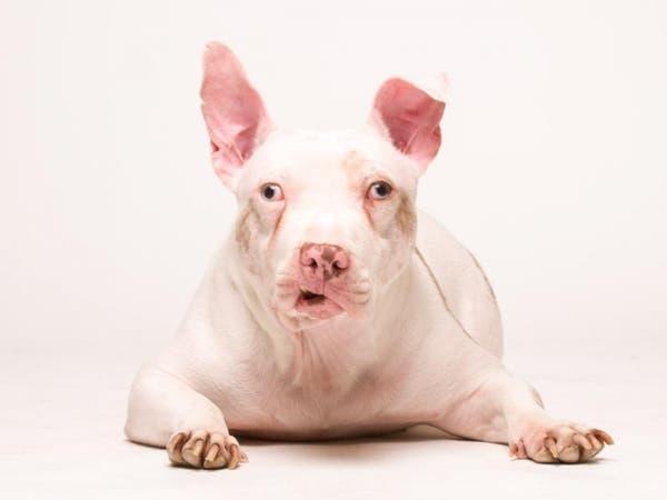 Michael Bagley & Bankwell's Pet Adoption Project Celebration - Greenwich, CT Patch