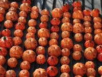 blog - halloween photo by vcgvcg via getty imagesgettyimages 458029892 - Halloween Stuff to do...