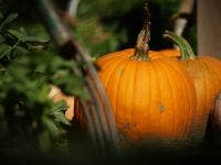 blog - halloween photo by alex wonggetty images - Halloween Stuff to do...