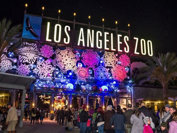 la zoo lights sets the zoo aglow with wonder awe and wow