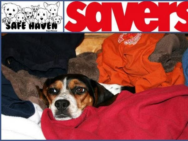 Clean Your Closets Safe Haven Dog Rescue / Savers Clothing Drive