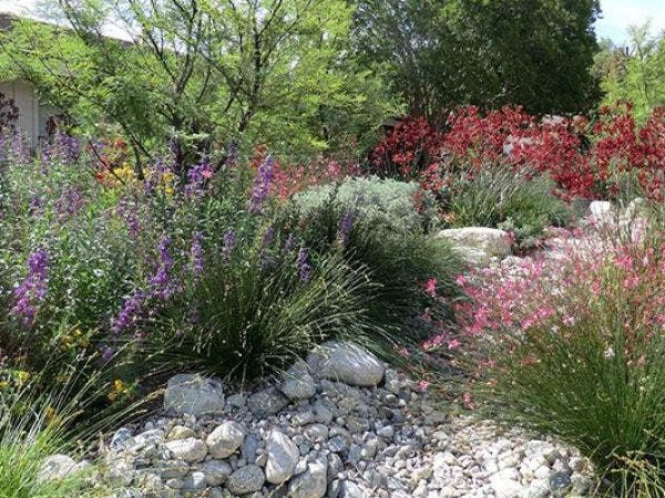 Landscaping with California Native Plants with Aaron Potter & Christian  Lewis - Mar 25 Landscaping With California Native Plants With Aaron Potter