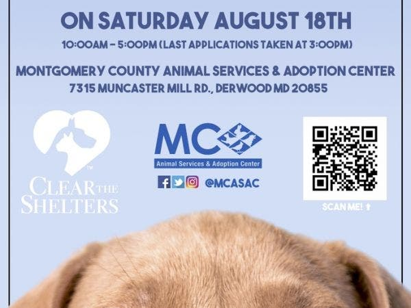 Aug 18 Free Pet Adoptions Montgomery County Animal Services