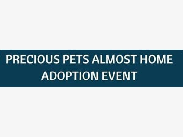 Precious Pets Almost Home At Chicago Northside Toyota March 9