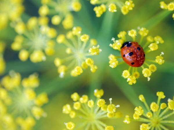 Pike Nurseries Aflutter With Activity During Annual Ladybug Weekend April 21 23