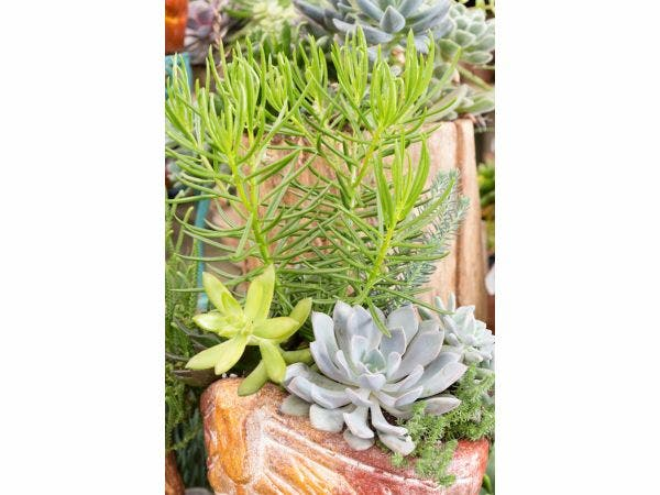 July Flourishes With Informational Cles At Pike Nurseries Savvy Succulents Cl