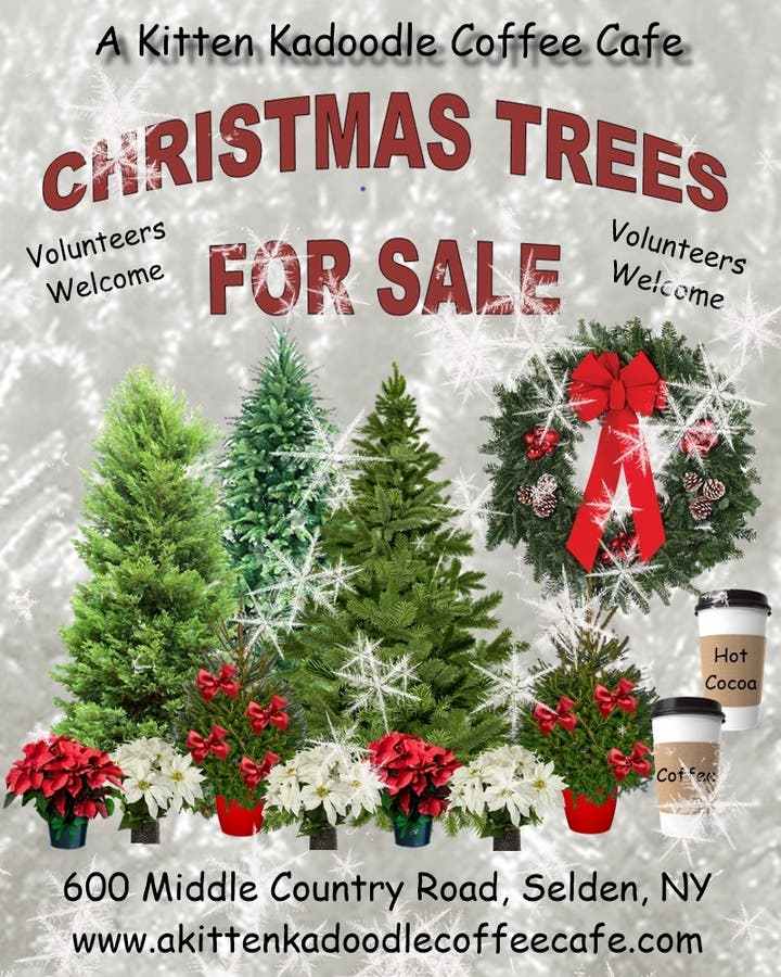 Christmas Trees For Sale.Dec 4 Christmas Trees For Sale W A Kitten Kadoodle Coffee