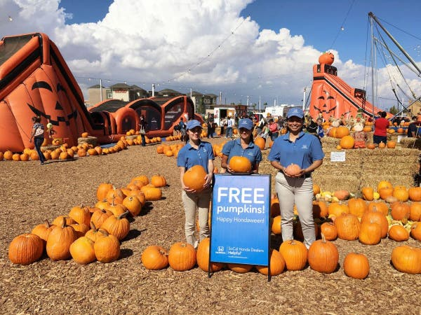 Oct 23 Free Pumpkins At Stu Miller S Pumpkin Patch In