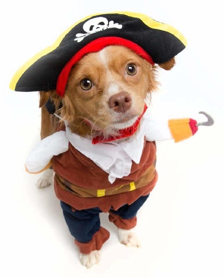 Oct 14 | Halloween Party & Adoption Event at Naperville