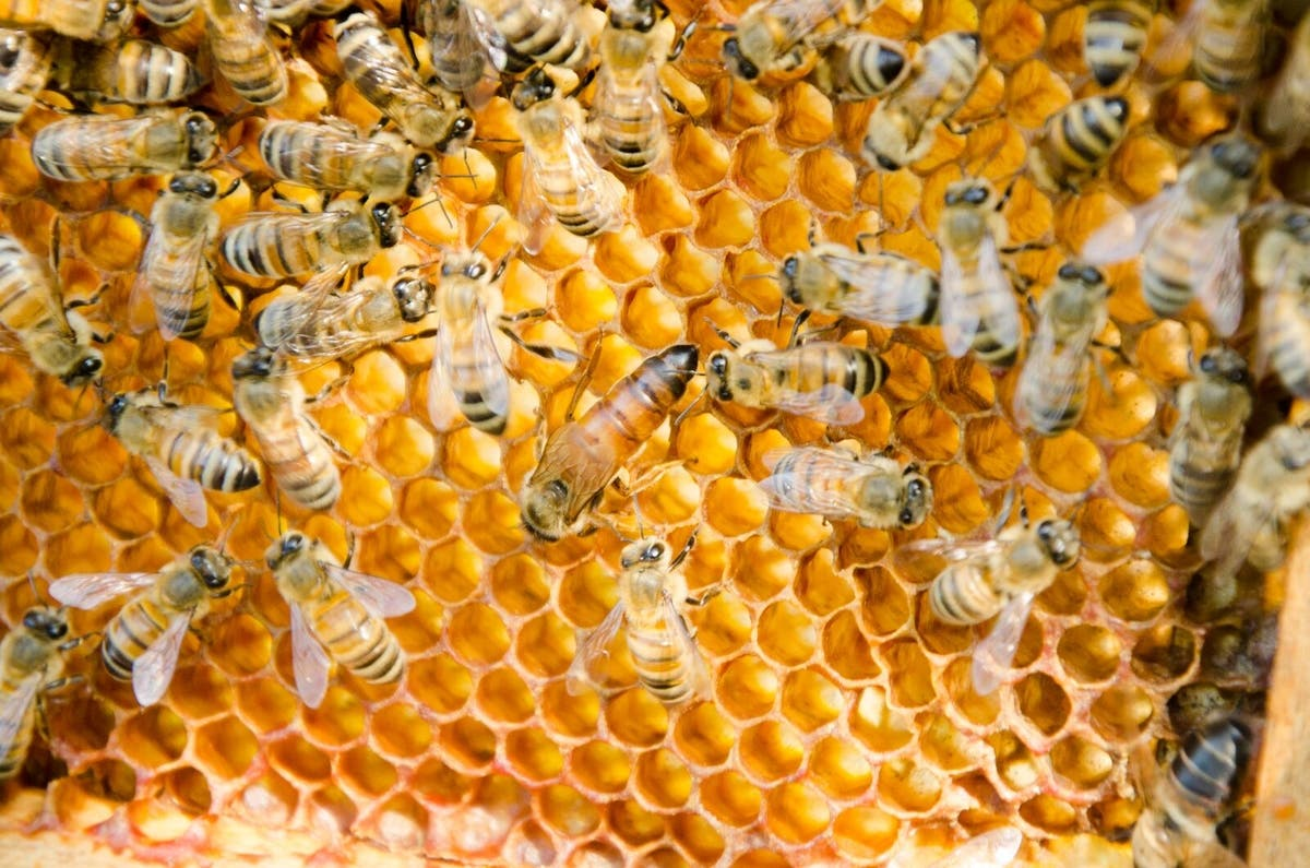 Apr 26 | Conscious Beekeeping- Beginners Session | Nyack