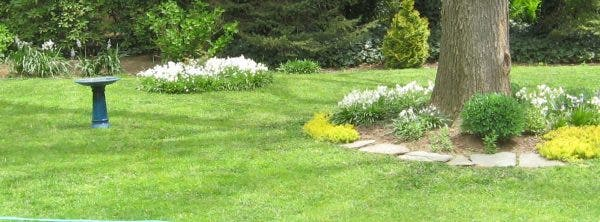 Apr 25 Non Toxic Lawns Gardens And Weed Free Sidewalks West