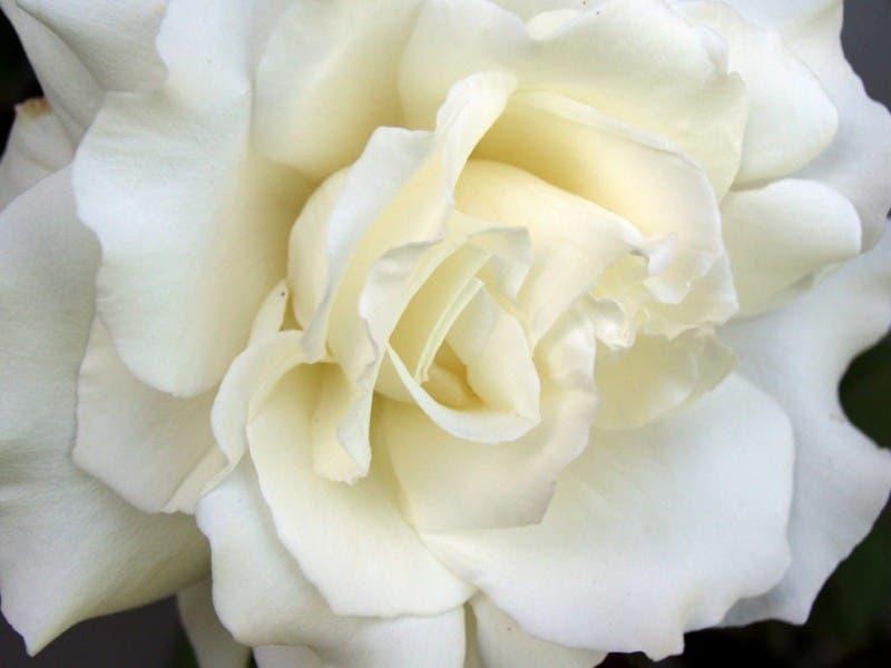 Wildwood Woman Dies in Tennessee Car Crash | Eureka, MO Patch