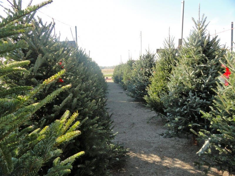Where to Get Your Christmas Tree | Avon-Avon Lake, OH Patch