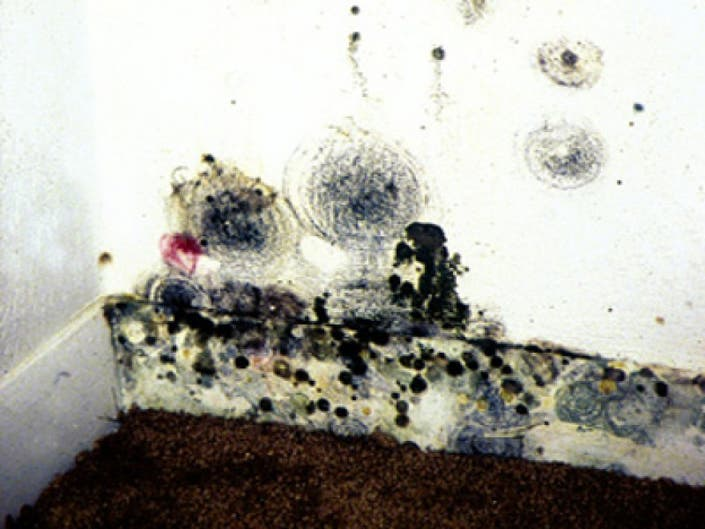 Tips For Cleaning Harmful Mold After Flooding Rain Of Hurricane Irene