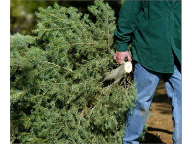 Philadelphia Christmas Tree Recycling Begins Monday - Philadelphia Christmas Tree Recycling Begins Monday Roxborough, PA
