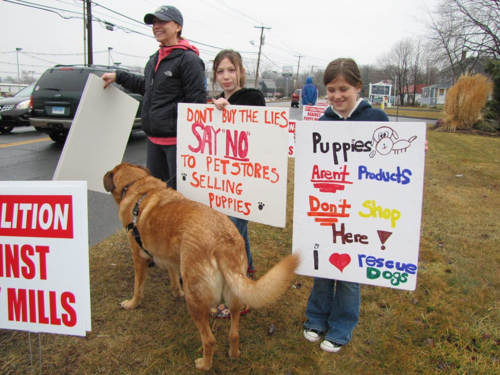 Protesting The Sale Of Puppies From Kansas Based Breeders Branford Ct Patch