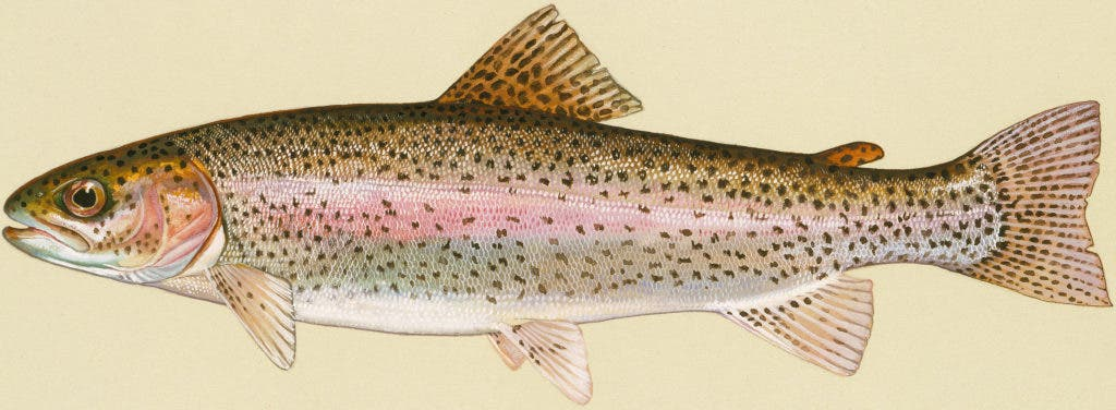 DEP: Grenloch Lake Trout Stocking This Week | West Deptford, NJ Patch