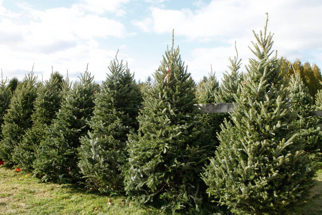 Is A Christmas Tree On Your Black Friday List Buy One