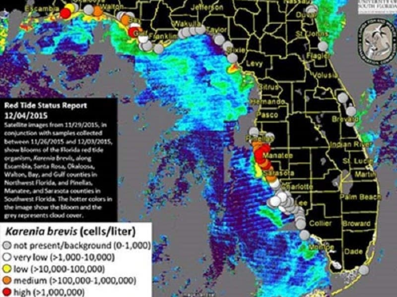 Red Tide Makes Its Way To Pinellas St Pete Fl Patch
