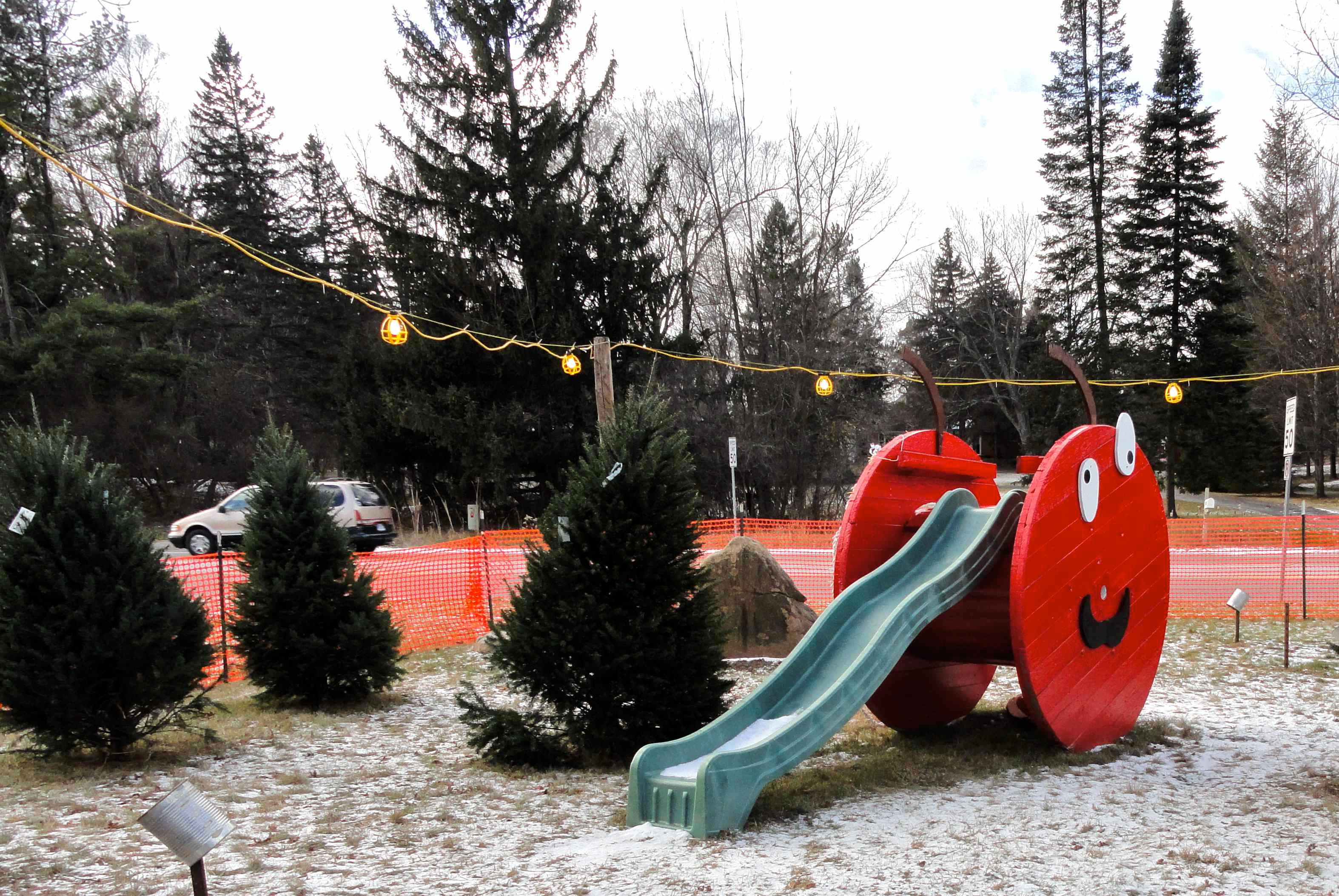 Tannenbaum Outdoor.O Tannenbaum O Tannenbaum Tips For Picking Out The Perfect