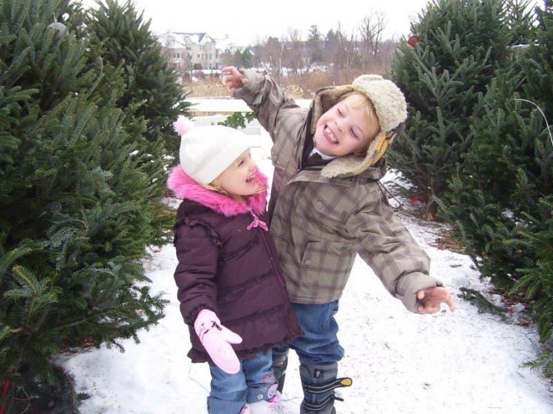 top 5 longest lasting christmas trees - Best Smelling Christmas Tree