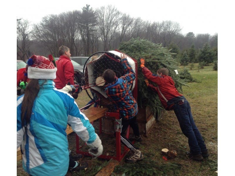 Local Christmas Tree Farms In The Acton Area