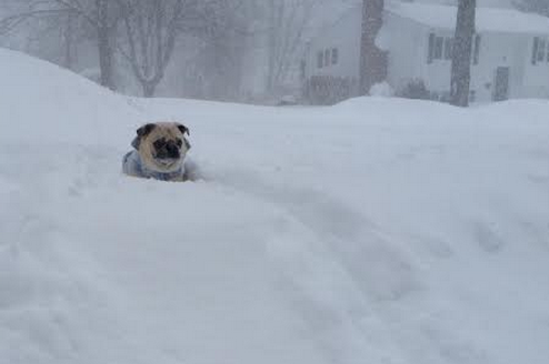 When Will the Blizzard Hit Nashua? Hour-by-Hour Forecast