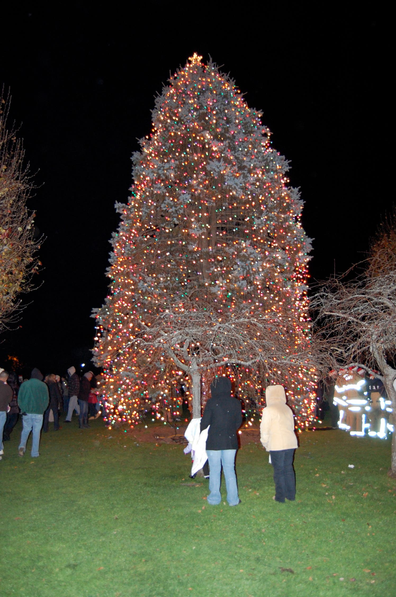 10 Places To Choose A Christmas Tree Southampton Ny Patch