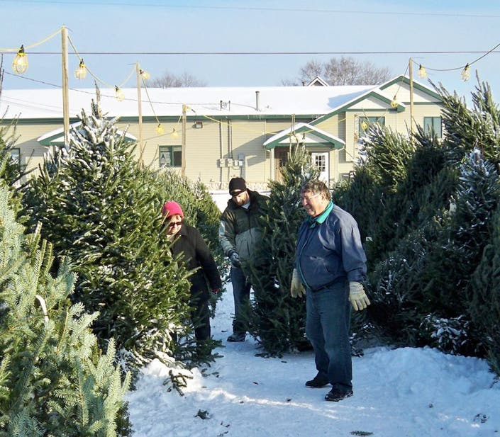Christmas Trees Go On Sale Around St Michael Albertville