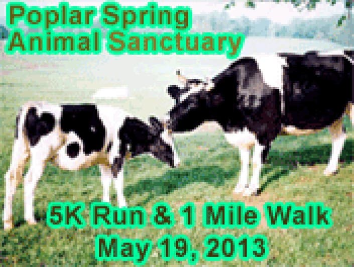 Poplar Spring's 10th Annual Run For The Animals: 5K Race 1 ...