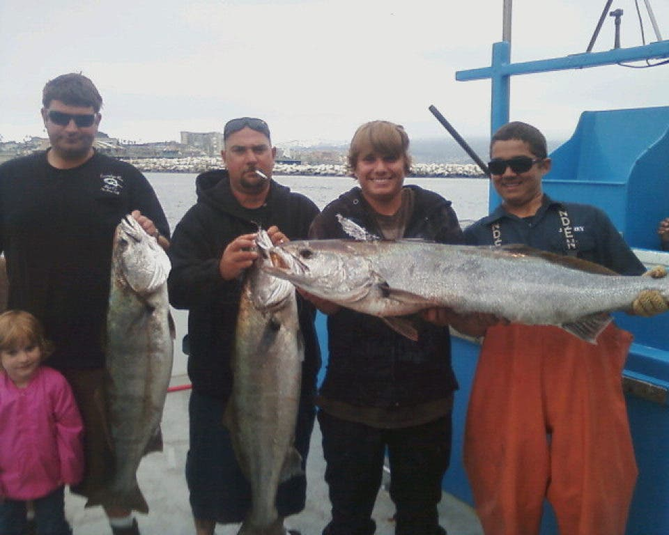 Thresher Sharks Biting Off Socal Coast Redondo Beach Ca Patch