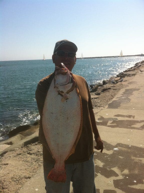 Fishing Report: Island Yellowtail and Halibut In the Surf