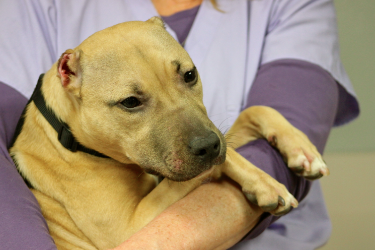 Maimed Puppy Looking For Home As Officials Hunt Her