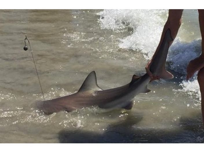 Sharks, Swimming Bears and Wild Weather: Summer 2015 In New Jersey