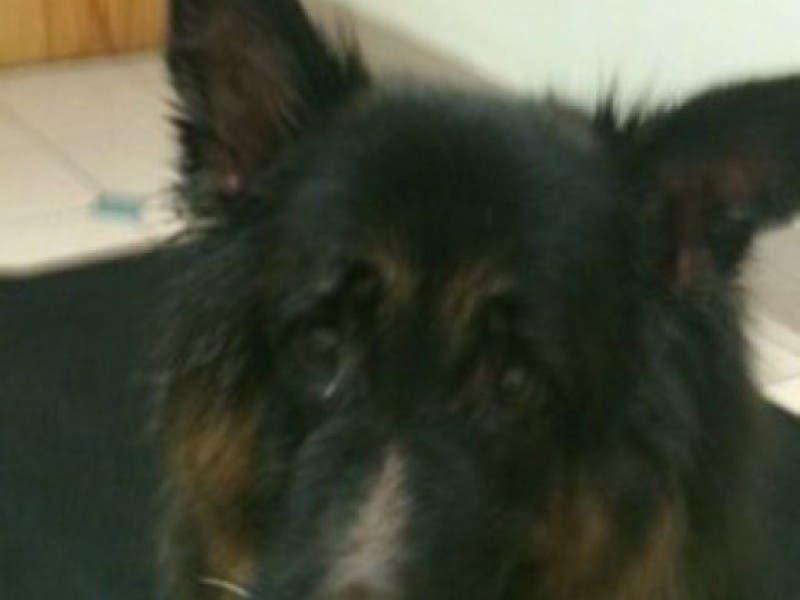A Dog Named Bear Is Homeless Again Berkeley Nj Patch