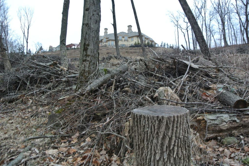 UPDATE: Man Accused Of Illegally Cutting Neighbor's Trees