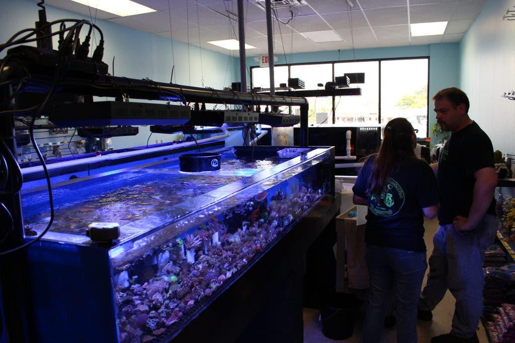 Goodbye Frazer Zoo Hello Aquarium Specialties Research Malvern Pa Patch