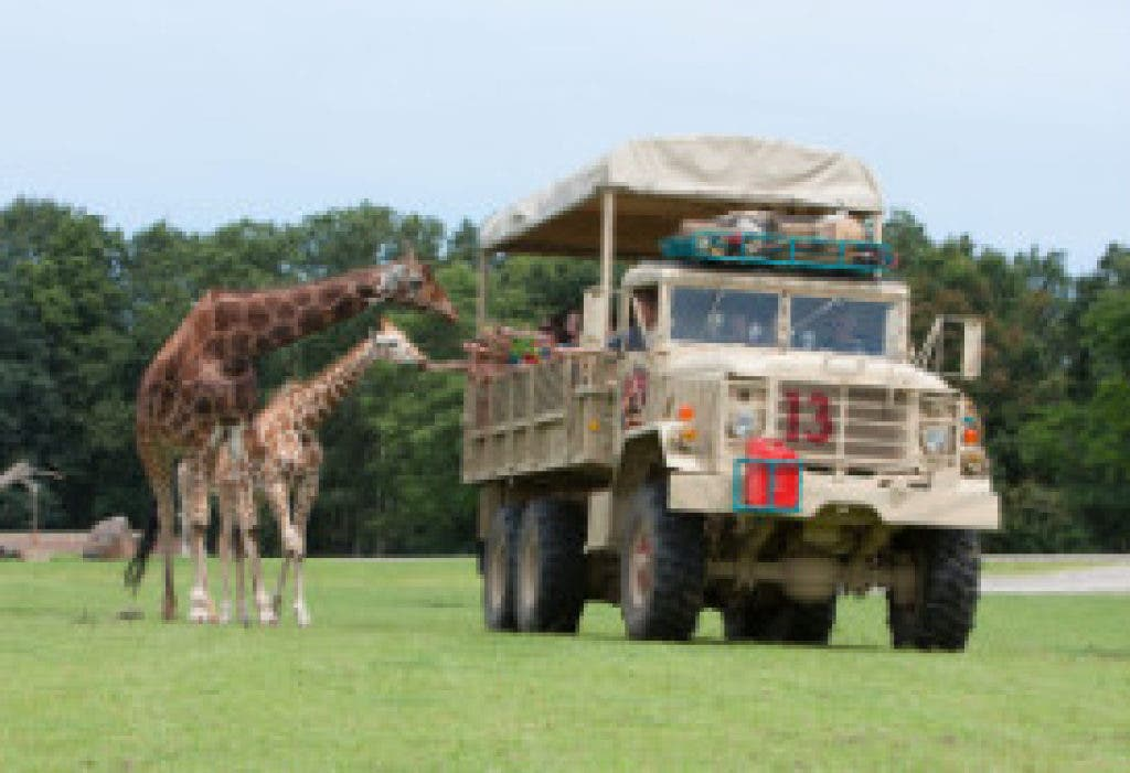 Only Six Flags Vehicles Allowed to Drive Through Safari