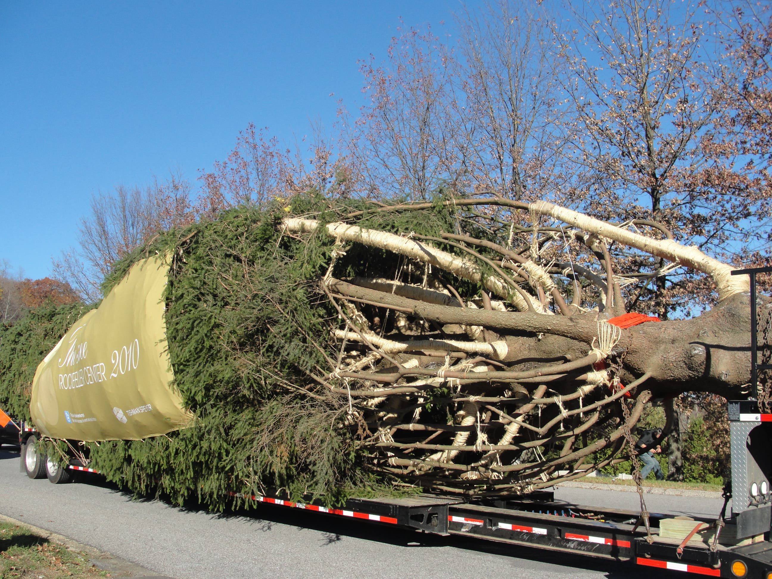 Christmas Tree In Nyc.Rockefeller Christmas Tree Makes Its Way From Mahopac To Nyc