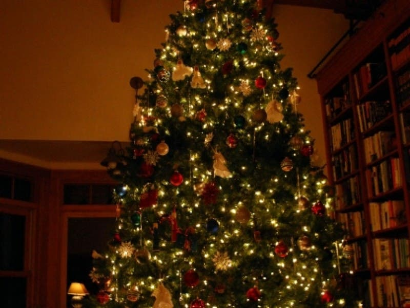 Christmas Tree Recycling In Livermore