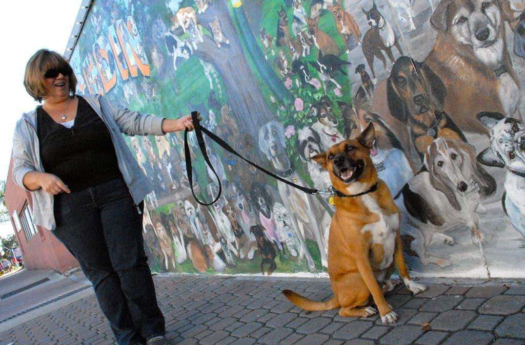 Artist Seals The Skip S Dogedin Wall Dunedin Fl Patch