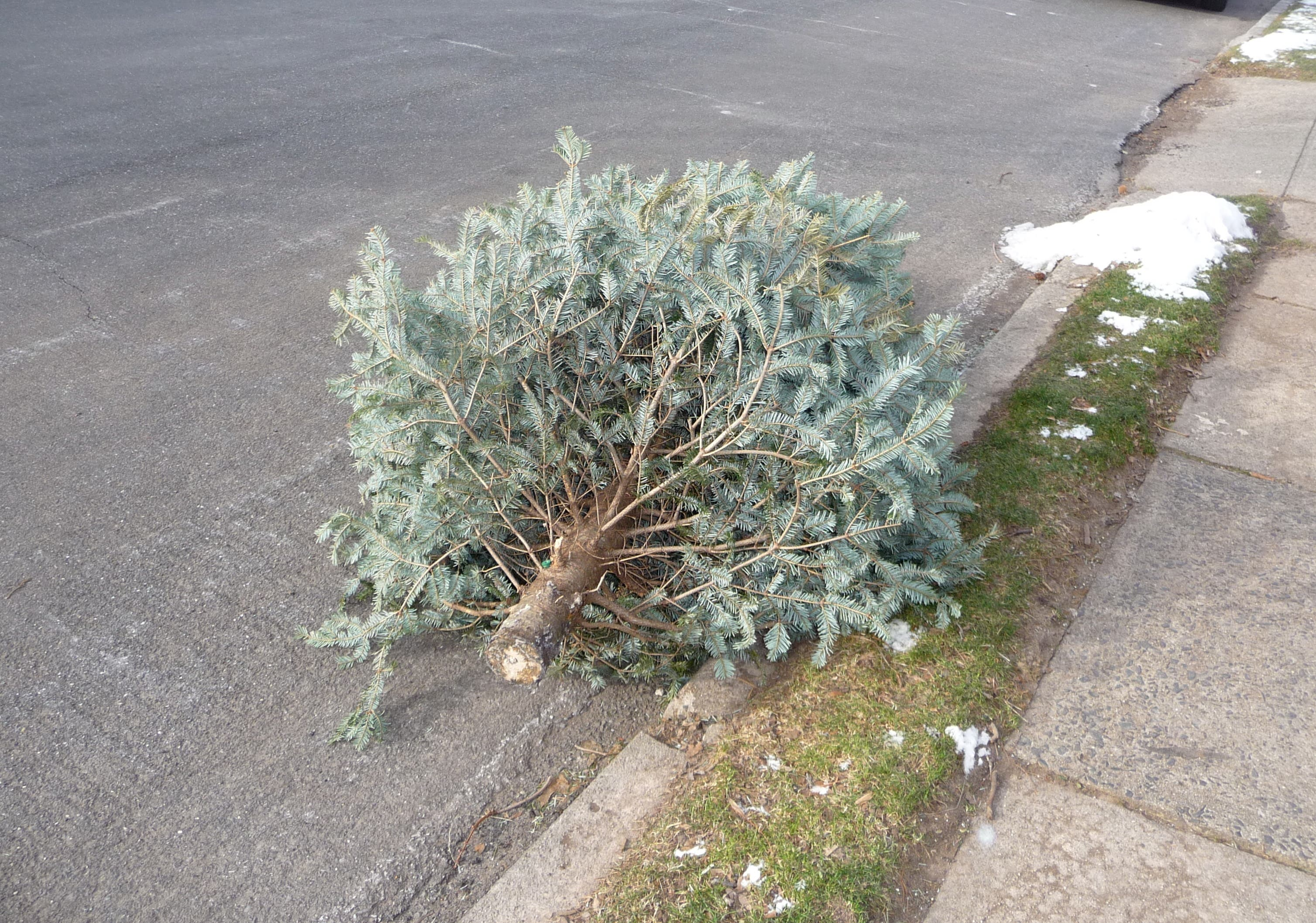 Christmas Tree Disposal Pick Ups