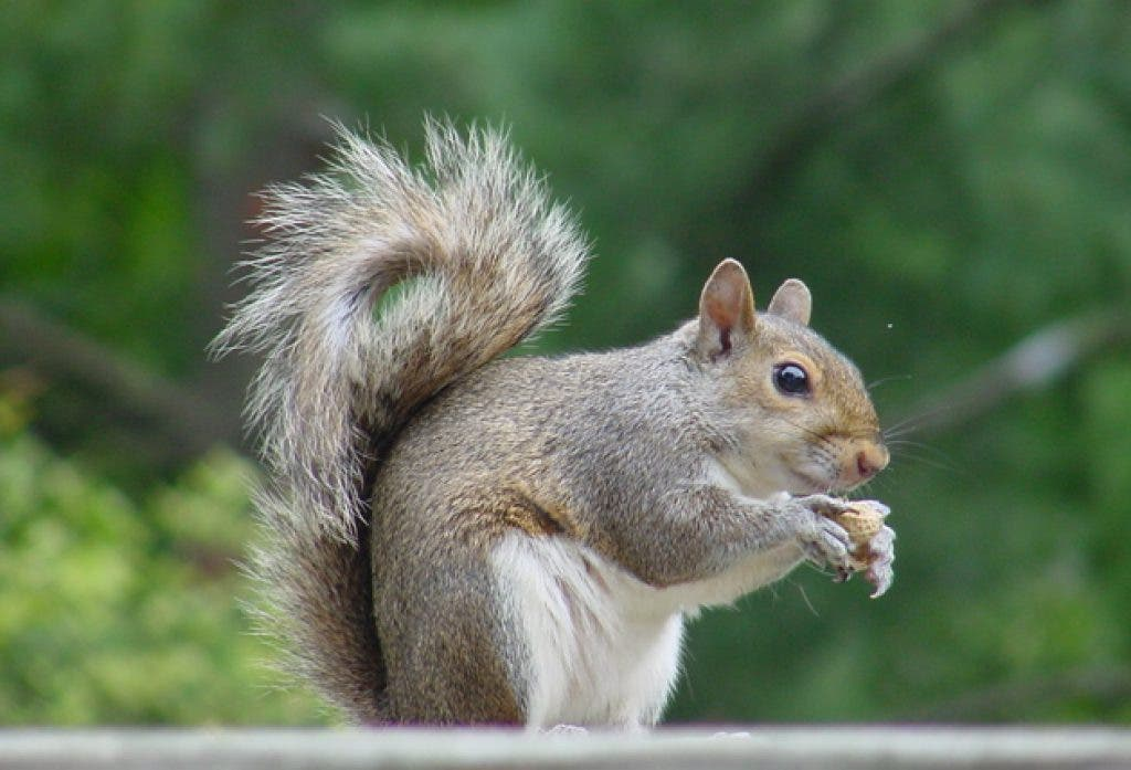 Man Cited for Shooting Birds, Squirrels in Back Yard