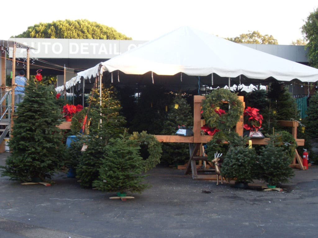 Delancey Street Christmas Trees.Selling Trees To Raise Funds In Brentwood Brentwood Ca Patch