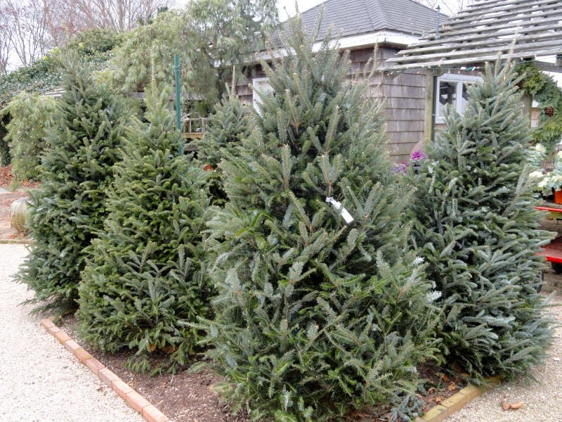 15 places to buy a christmas tree - Best Place To Buy A Christmas Tree