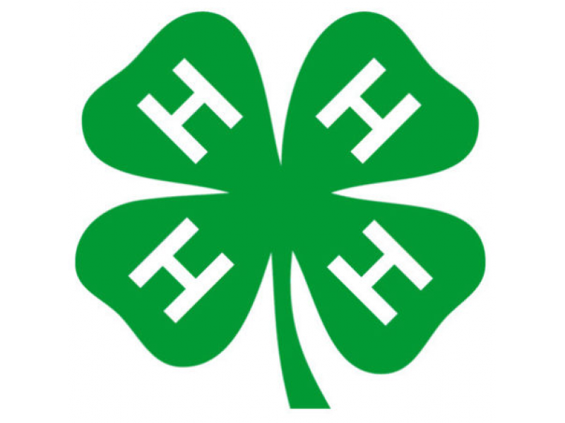 photo about Printable 4 H Clover identify Pickens County 4-H Provides Cles, Golf equipment Easley, SC Patch