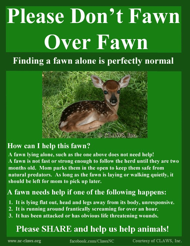 Be A Dear, Leave The Fawns Alone!-0