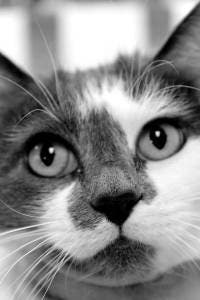 Hyperthyroidism In Cats Kent Oh Patch