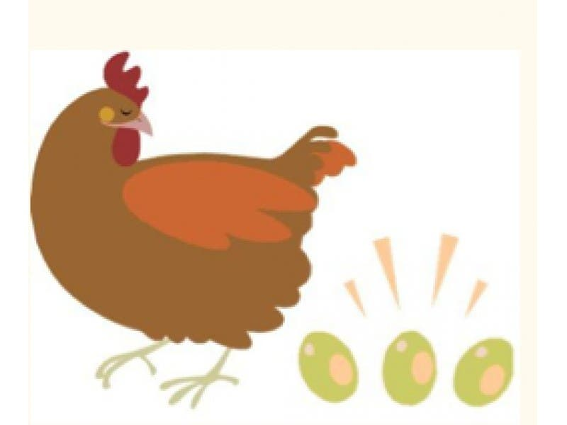 Backyard Chickens And Flies feathers may fly tonight: city meeting on backyard chickens  and